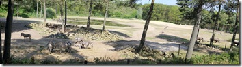 safari_panorama_1