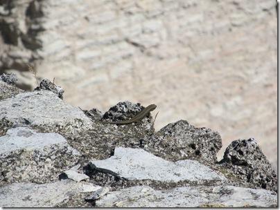 Eidechse in den Grotten des Catull